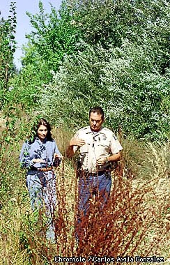 Santa Clara County Game Warden Henry Coletto, right, and Rebecca Trevino, executive director of the Silicon Valley Animal Rescue, look over environmental damage caused by wild pigs at Joseph D. Grant Park in east San Jose. The Santa Clara County Regional Parks and Recreation Department has a policy of trapping and shooting the animals, but Coletto and Trevino are trying to find a more humane solution to the problem. (CHRONICLE PHOTO BY CARLOS AVILA GONZALEZ) Photo: CARLOS AVILA GONZALEZ