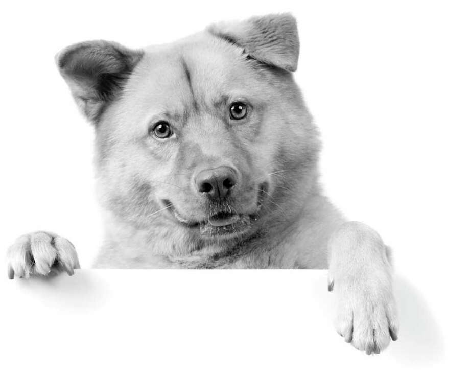 Dogs can have singular minds. (fotolia.com) Photo: Michael Pettigrew / Michael Pettigrew - Fotolia