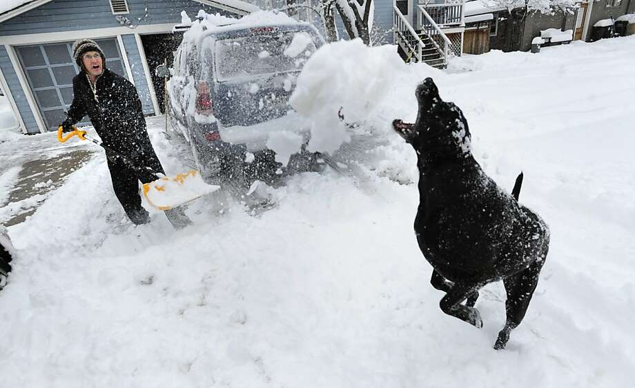 When Art Allen and Willie clear their driveway in Boulder, Colo., Art does most of the shoveling and Willie most of the eating, if you catch our drift. Photo: Paul Aiken, Associated Press