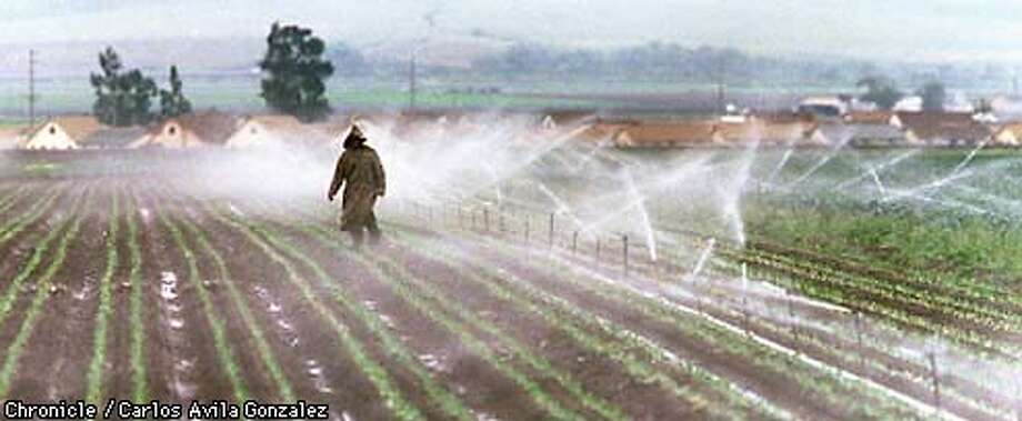 A farmworker trudges through feilds adjusting sprinkler heads just east of the central valley town of Chualar, Ca., where rising Nitrate levels in the water, most likely from farm runoff, have caused the drinking water to be deemed unsafe. (CHRONICLE PHOTO BY CARLOS AVILA GONZALEZ) Photo: CARLOS AVILA GONZALEZ