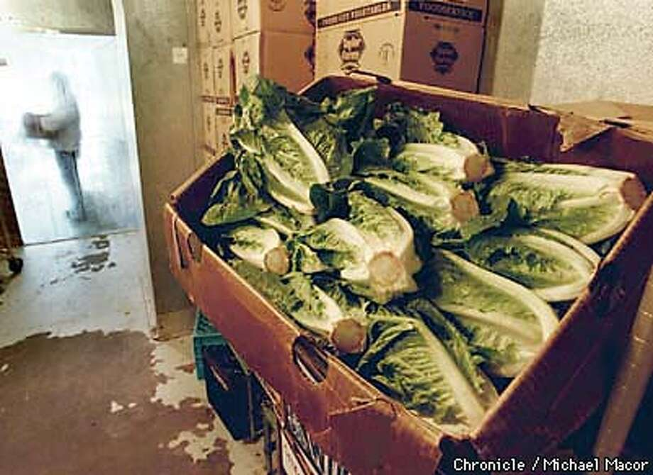 Lettuce prices have gone through the roof because of winter rains in Salinas, which have delayed planting. PASQUA's Commissary in San Francisco uses boxes and boxes of lettuce to make their sandwiches and salads each morning. About 4 weeks ago the last low price was $8 - $13 per case of Romaine lettuce, last week the same case peaked at $55. By Michael Macor/The Chronicle Photo: MICHAEL MACOR