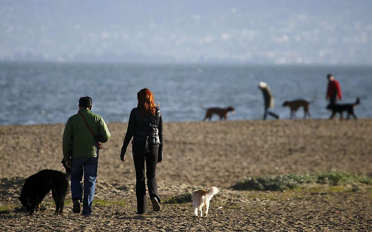 Dogs and humans walk on the beach at Crissy Field in San Francisco, Calif. on Friday, Feb. 3, 2012.