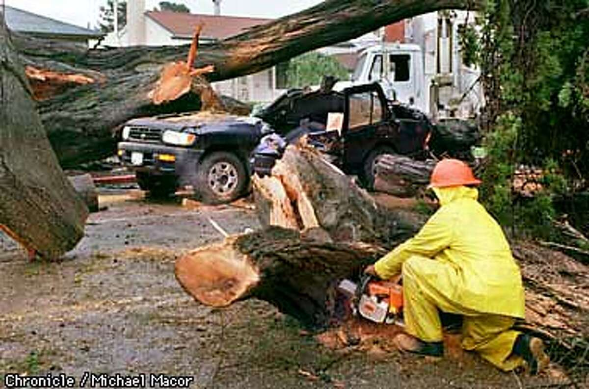 A motorist was killed Thursday when a Monterey Cypress Tree fell onto his vehicle. The tree at the corner of 6th St. and Cedar in Berkeley. Workers remove the tree piece by piece with chain saws. Chronicle Photo: Michael Macor