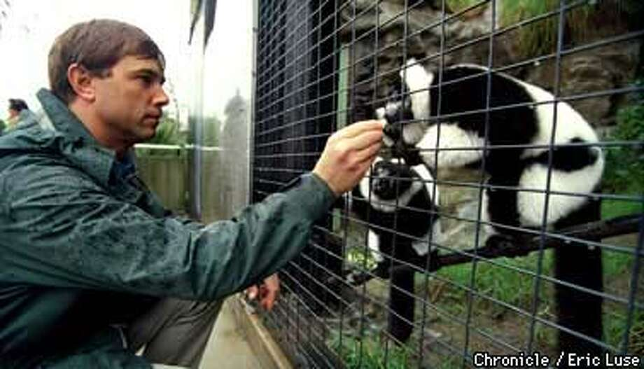 Dr. Graham Crawford, zoo veternarian treats a couple of Black and White Ruffed Lemurs to a banana at the San Francisco Zoo's Primate Discovery Center.  Photo by Eric Luse Photo: Eric Luse
