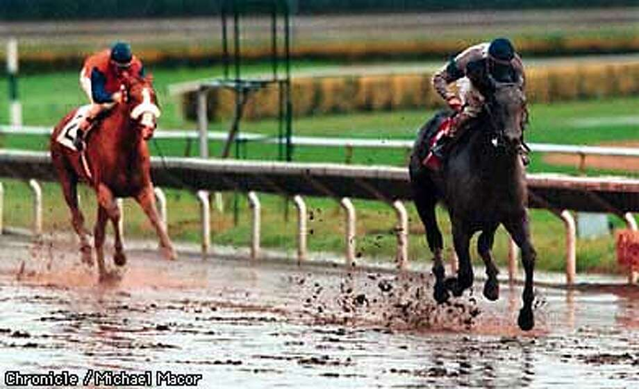 7th running of the Golden Gate Derby at Golden Gate Fields. CLOVER HUNTER with Russell Baze in the saddle pulls away at the finish to win, MANTLES STAR with Chris McCarron aboard finishes in 2nd place. Chronicle Photo: Michael Macor Photo: MICHAEL MACOR