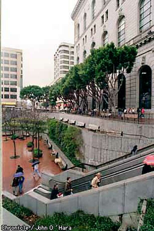 Ficus Tree removal. Monday morning BART passengers may have this view of the FICUS trees above Hallidie Plaza, but then they will be removed for smaller trees in pots.  Photo by...............John O'Hara