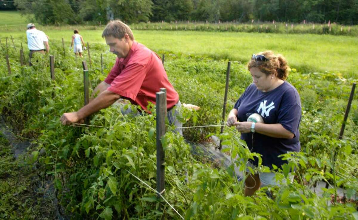 Carol Kaliff/staff photographer. Michael Pierwola of New Milford, left and Kristy Gray of Danbury tie string around tomatoe plant posts to keep them propped up in the HOPE Community Garden on Taylor Farm in Danbury. Photo taken August 10, 2009