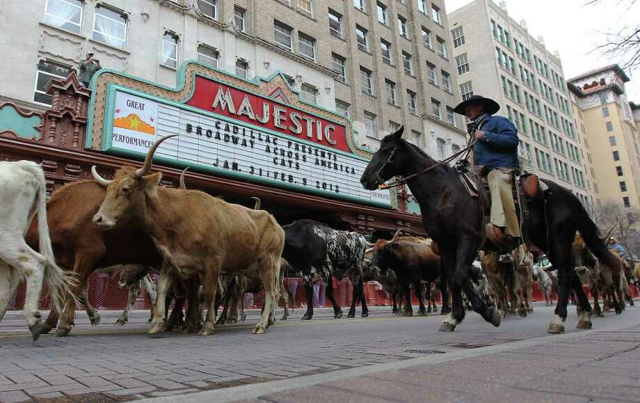 Several head of longhorn cattle mosey along Houston Street to the delight of onlookers. The San Antonio Stock Show & Rodeo gets fully under way Thursday. Photo: Kin Man Hui, San Antonio Express-News / San Antonio Express-News