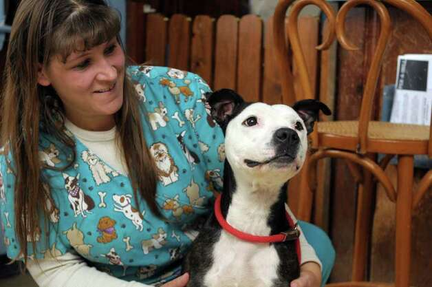 Lisa Mundell, an animal care technician at the shelter sits with Hope, a pit bull rescued from Schenectady,  at the Montgomery County SPCA on Tuesday, Jan. 24, 2012 in Amsterdam, NY.  (Paul Buckowski / Times Union) Photo: Paul Buckowski