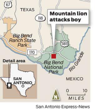 Big Bend mountain lion attacks boy, 6 - San Antonio ...
