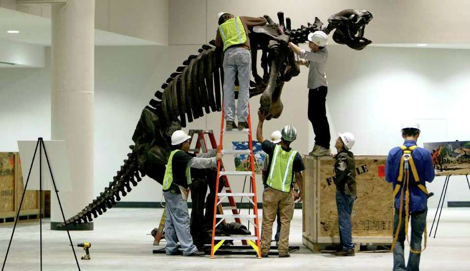 Workers assemble an Eremotherium in the new Paleontology Hall at the Houston Museum of Natural Scien