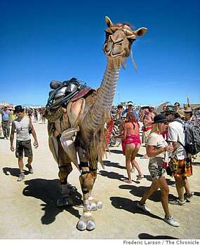 A camel outfit, fitted for two persons walks on the playa to the amazement of many during the Burning Man festival at Black Rock NV, on August 29, 2008. Photo: Frederic Larson, The Chronicle