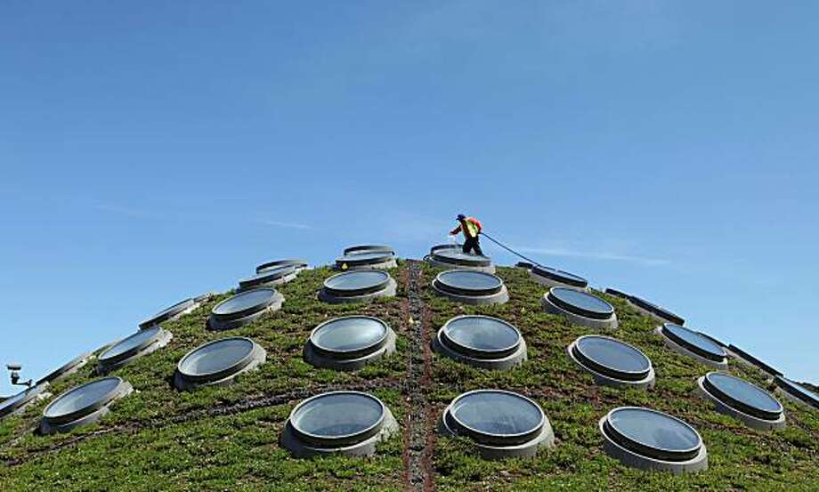 Contractor Guadencio Sanchez waters the Living Roof at the California Academy of Sciences in San Francisco's Golden Gate Park. The academy's green rooftop keeps the building's interior an average of 10 degrees cooler than a standard roof would. The plants also transform carbon dioxide into oxygen, capture rainwater, and reduce energy needs for heating and cooling. Photo: Jeff Chiu, AP