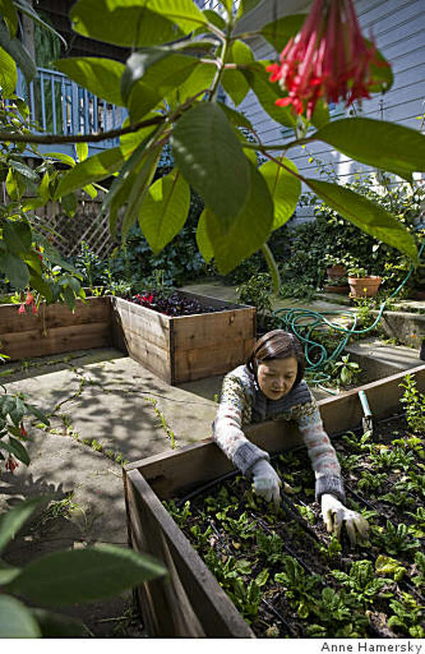 Victory gardener Teresa Lui. ONE TIME USE ONLY! Photo: Anne Hamersky
