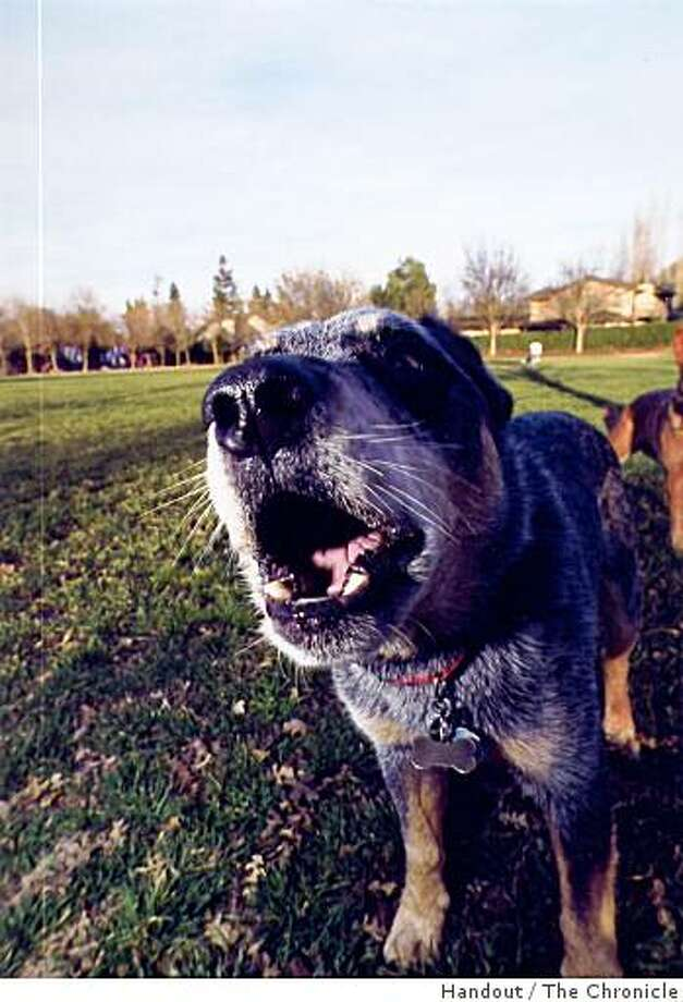 Do dogs use their bark as a method of communication between themselves? Ask The Vet column provides an answer. Chronilce archive photo from 2002. Photo: Handout, The Chronicle