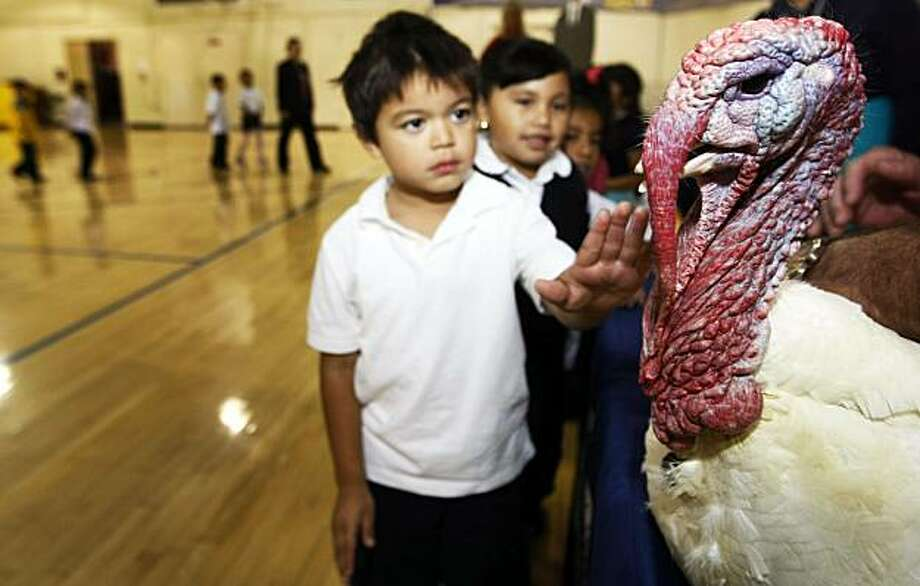 Anthony Ajpop, 5,  from Rosalia Rangel's kindergarten class touches a turkey for the first time. Children at George R. Moscone Elementary School in San Francisco got a rare visit Wednesday Nov. 17, 2010, by two Presidential turkeys that are being raised in California's Central Valley on the Wellsford Ranch in Modesto. Finalists from the flock of 25 will visit and White House next week seeking a pardon from President Obama. In the meantime, birds from the flock are taking part in a statewide agriculture classroom program sponsored by Foster Farms. Photo: Lance Iversen, The Chronicle