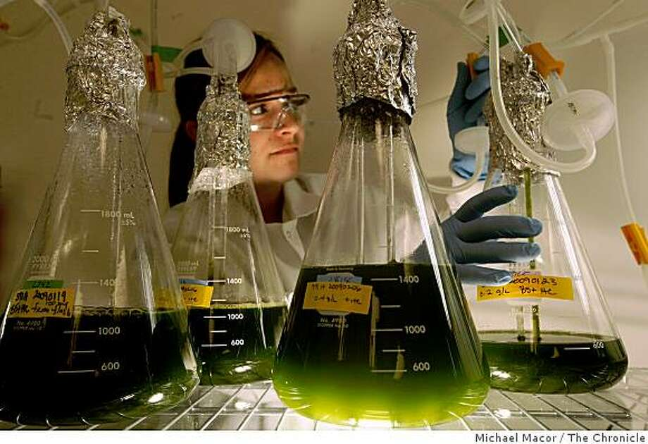 "Senior research associate, Anna Coragliotti, with beakers filled with developing algae used in the production of many biofuels by the company, ""Solazyme"" in South San Francisco, Calif. on Friday April 3, 2009, as the search for biologically-derived transportation fuels has exploded into a drag race for local Bay Area researchers. Photo: Michael Macor, The Chronicle"