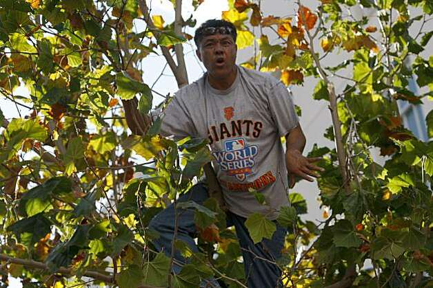 After the San Francisco Giants won the World Series, A man climbed a tree on Grove street to get a better view of the victory parade on Wednesday Nov. 03, 2010 in San Francisco, Calif. Photo: Mike Kepka, The Chronicle