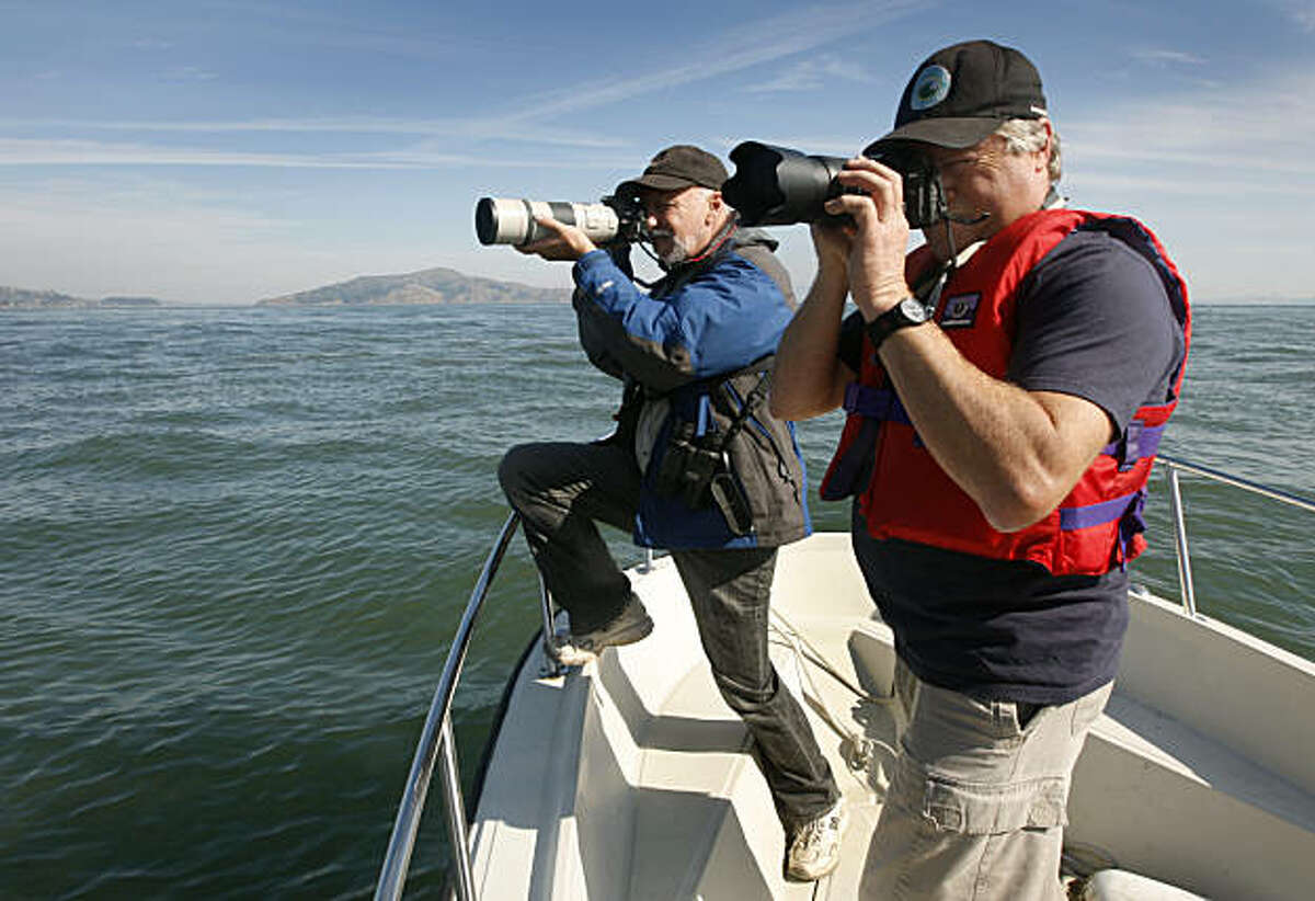Bill Keener (left) and Izzy Szczepaniak photograph harbor porpoises as they surface for air near Fort Baker in Sausalito, Calif., on Wednesday, Nov. 3, 2010. The marine biologists are taking a close look at the cetaceans, which haven't been seen inside the Golden Gate in many years.