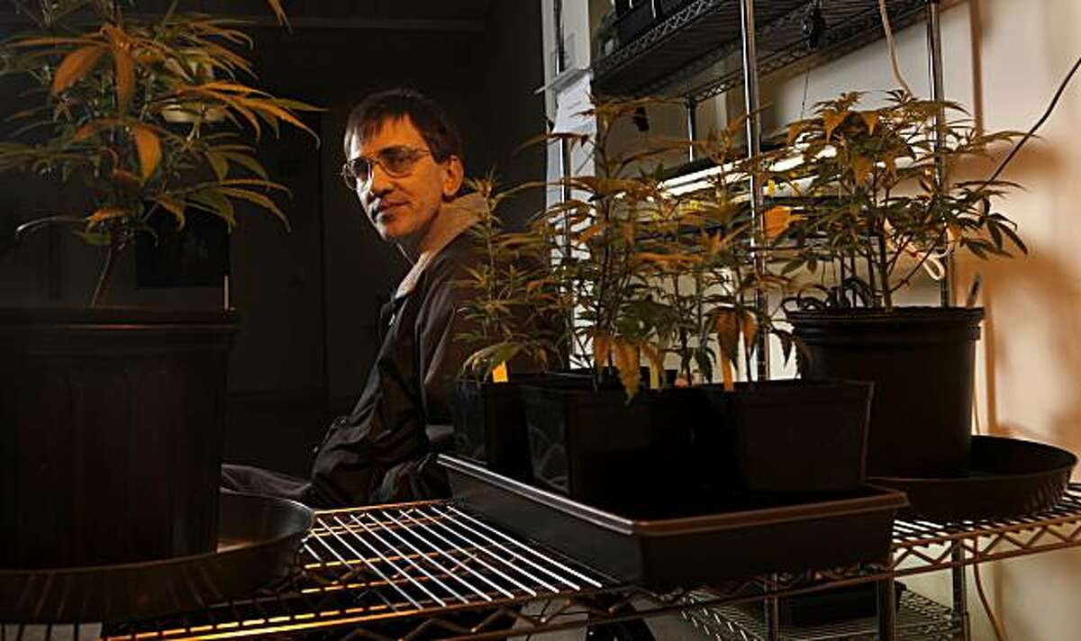 Richard Lee, who founded Oaksterdam University in 2007 sits under the grow lights in the horticulture lab on the campus, Thursday, May 20, 2010, in Oakland, Calif.
