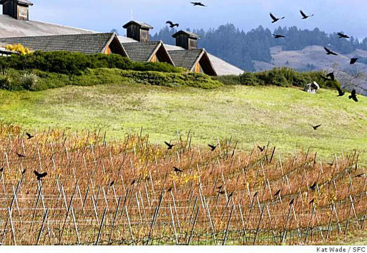 Grape vines in full fall colors and a flock of Black Birds beneath the French owned Roederer Estate winery where they create sparkling wines in the coastal region of Philo, California on Tuesday November 21, 2006.