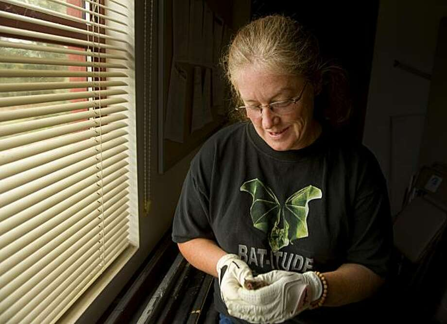 "Mary Jean ""Corky"" Quirk  holds one of the bats she uses in hands on demonstrations to classrooms and gatherings, where she talks about the wounders and benifets of bats, Thursday Oct. 28, 2010. There are no bats in California that feed on blood, according to scientist Scott Osborn, of the California Department of Fish and Game, who has taken it upon himself to dispel the myths about the mysterious flying mammals. Among the 1,100 species of bats worldwide, there are only three species of vampire bats, all in Central and South America, and they usually limit their bloodsucking to livestock. There is, however, a new disease affecting bats in North America, which makes it all the more important for people to know how important the fragile bat populations are to the ecosystem, Osborn said. These misunderstood creatures provide great benefits to humans despite being unfairly maligned as filthy blood-sucking rodents, he said. Photo: Brian Baer, Special To The Chronicle"
