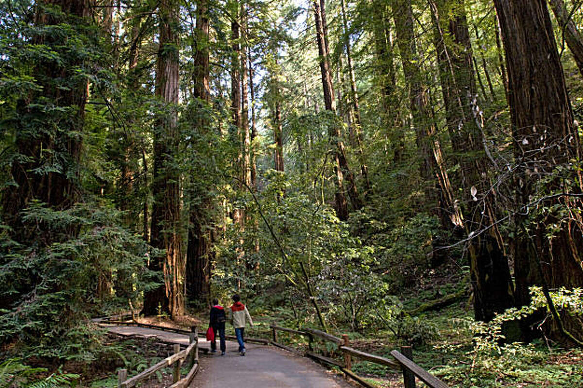 Tourists walk the trails of Muir Woods in Marin County, Calif., on Thursday, July 8, 2010.
