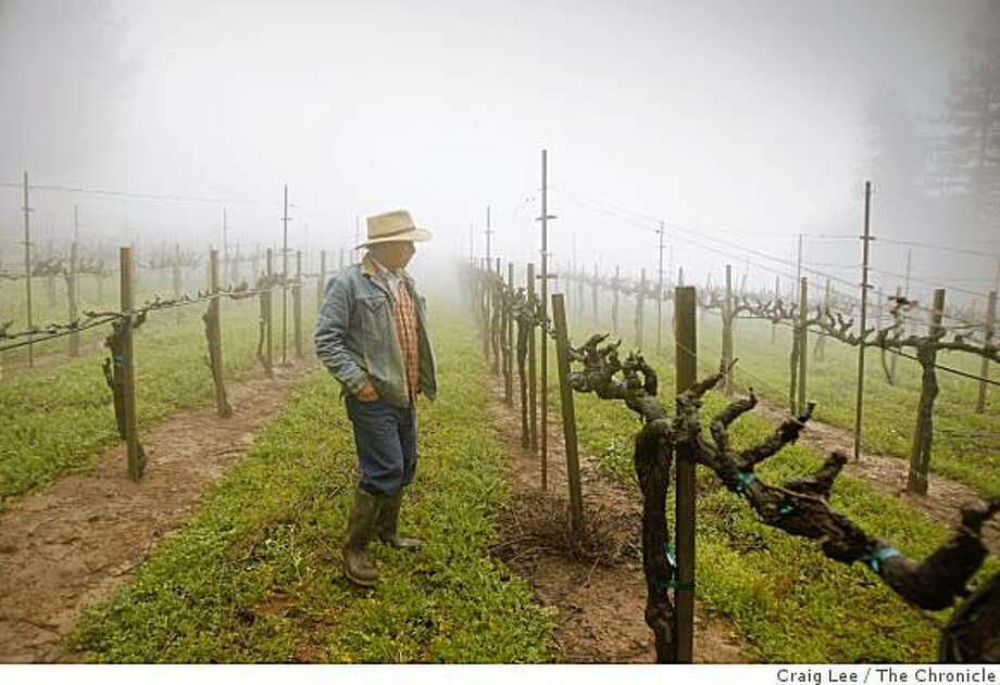 "David Hirsch in his ""Old Vineyard"" he planted in 1980 at his Hirsch winery in Cazadero, Calif., on February 23, 2009. Photo: Craig Lee, The Chronicle"