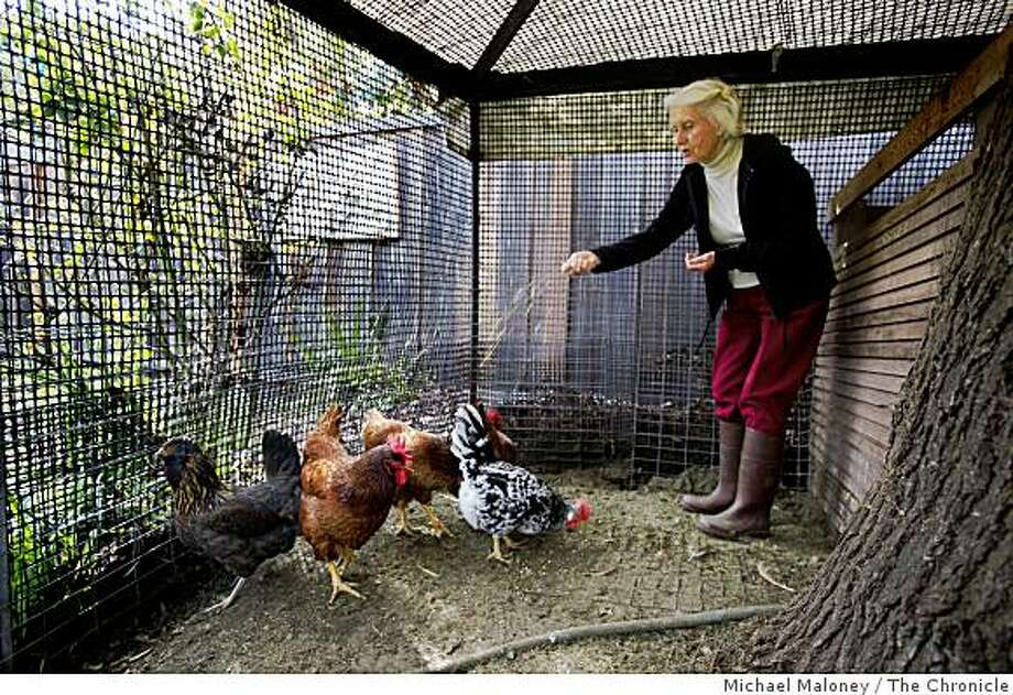 Adrienne Duncan, who will be 85 next month, feeds grain to some of the eight hens in the backyard of her Palo Alto, Calif., home on Wednesday, February 18, 2009. Photo: Michael Maloney, The Chronicle