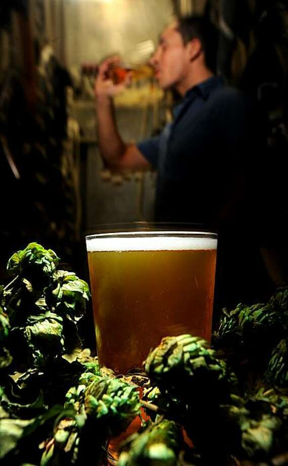 Hops flowers surround a glass of Triple Rock Brewery's Sorachi Ace on Thursday, Oct. 14, 2010, in Berkeley, Calif. In the background, bar manager Jesse Sarinana drinks a glass of the brew. EDITOR: THESE ARE ORNAMENTAL HOPS, NOT THE ACTUAL VARIETY USED TO MAKE THIS BEER. Photo: Noah Berger, Special To The Chronicle