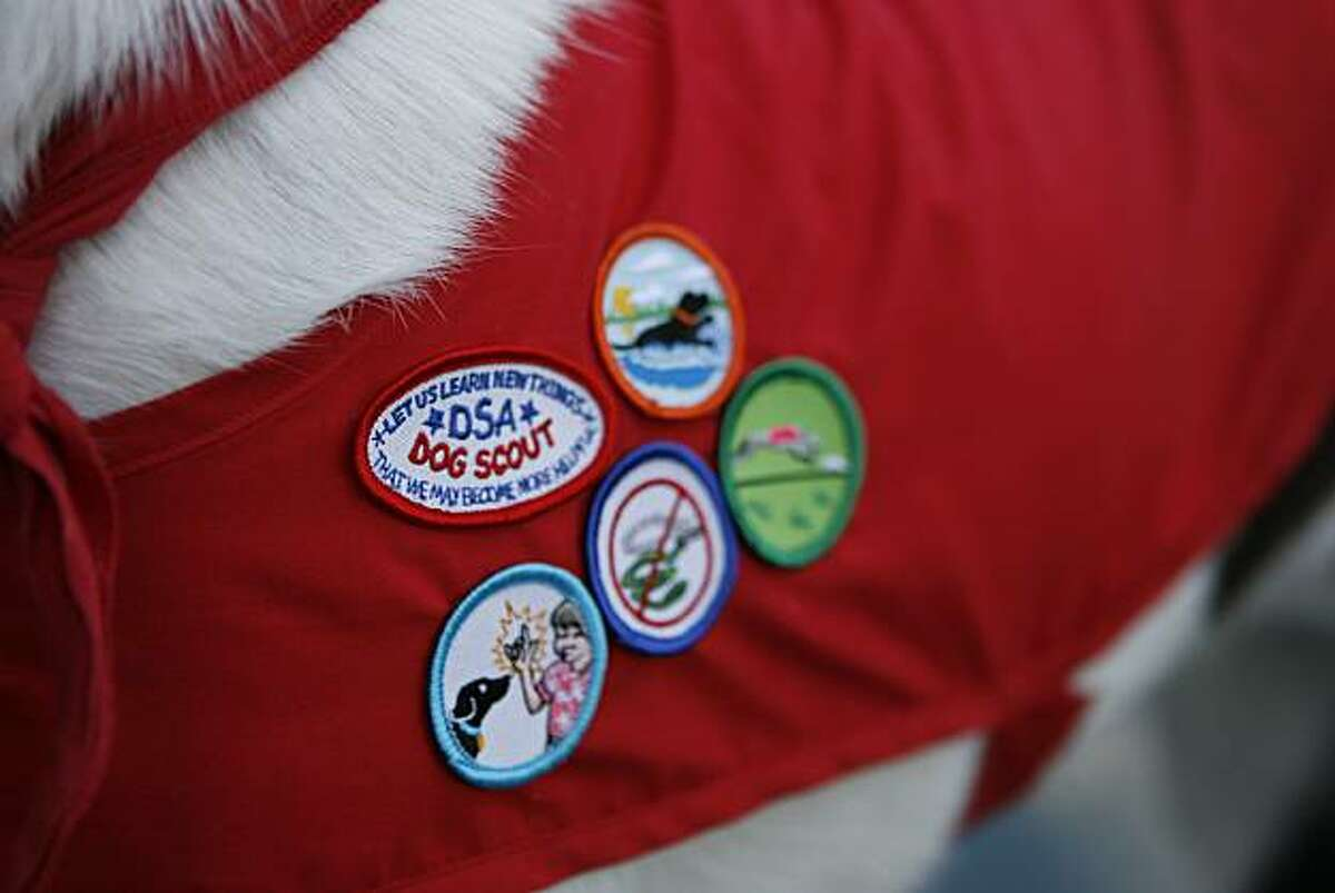 Jasper, a 22-month-old mixed breed, participates in the Dog Scouts of America program where he has been honored to be the first dog in the Bay Area to earn five merit badges in Santa Clara, Calif., on Monday, Oct. 11, 2010.