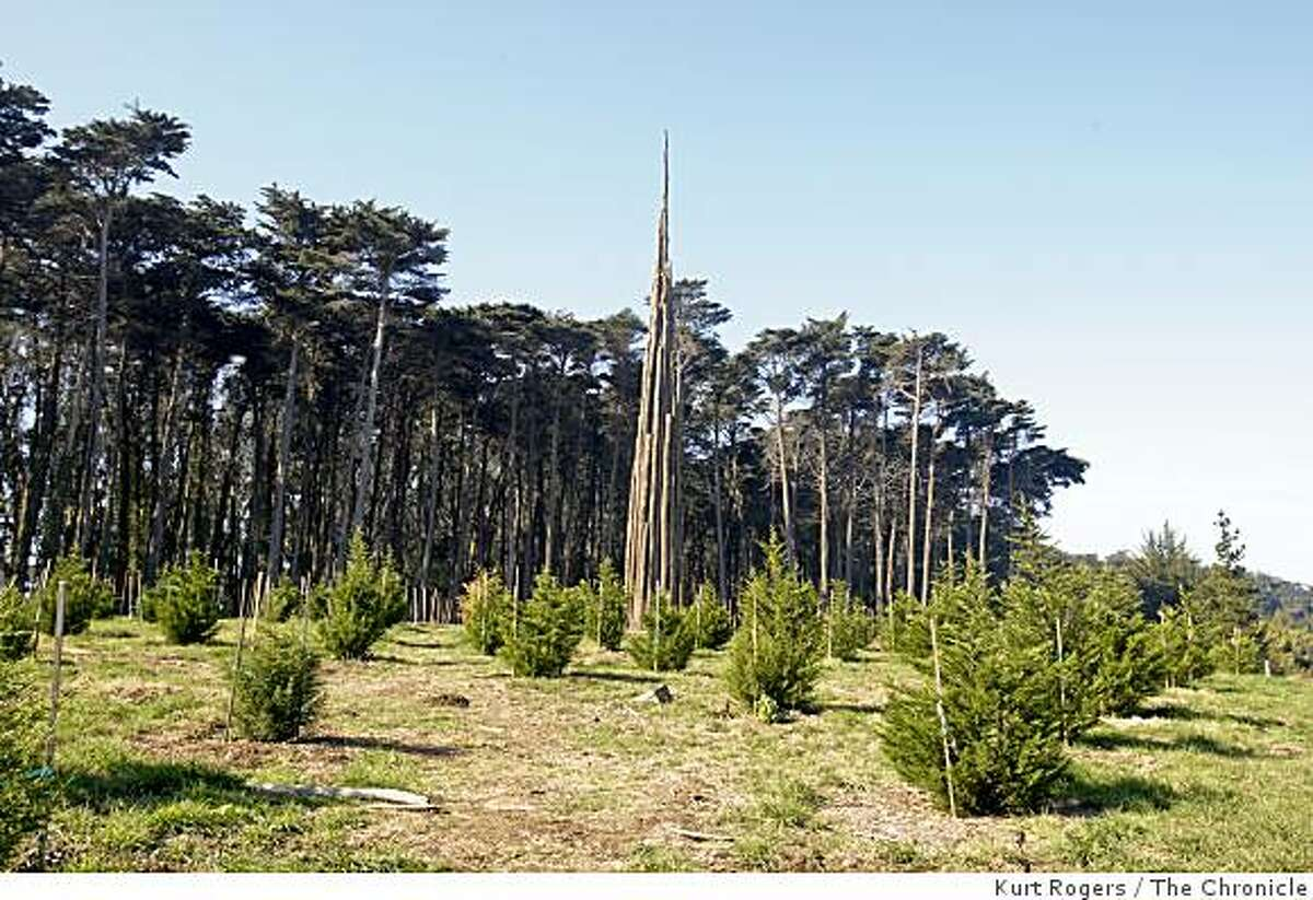 Goldsworthy's Spire sculpture at the top of the Presidio's Ecology Trail.. on Friday Jan 30, 2009 in San Francisco , Calif