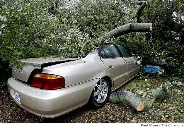 A car demolished by a 60-foot oak tree is still parked in a driveway on the 1000 block of Emerson Street in Palo Alto, Calif., on Monday, Feb. 16, 2009. Photo: Paul Chinn, The Chronicle