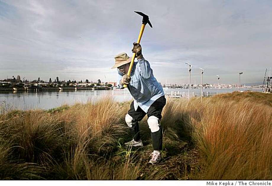 Neal Fishman joins other furloughed employees from the California Coastal Conservancy who decided to used their unpaid day pulling weeds at Union Point Park  on Friday Feb. 20, 2009 in Oakland, Calif. Photo: Mike Kepka, The Chronicle