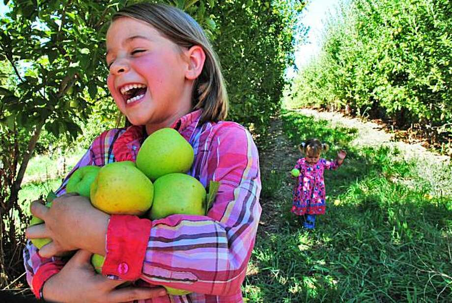 Charlee Beth Hollon, 6, of Camino cracks up as she struggles to hold an armful of apples at the orchard called Kids Inc. In the background is her sister, Tennessee, 2. Photo: John Flinn, Special To The Chronicle