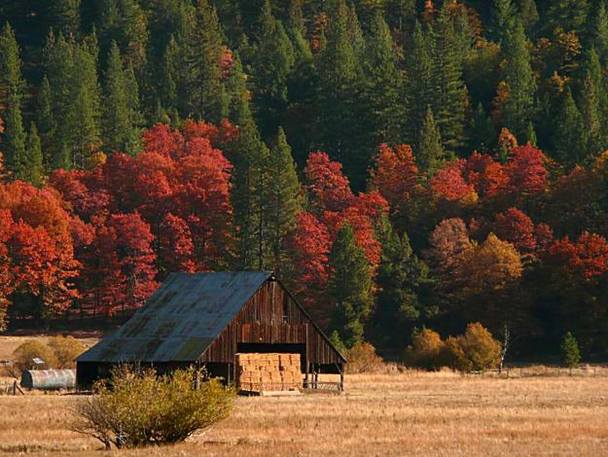 Fall colors and barn near Quincy, Plumas County.
