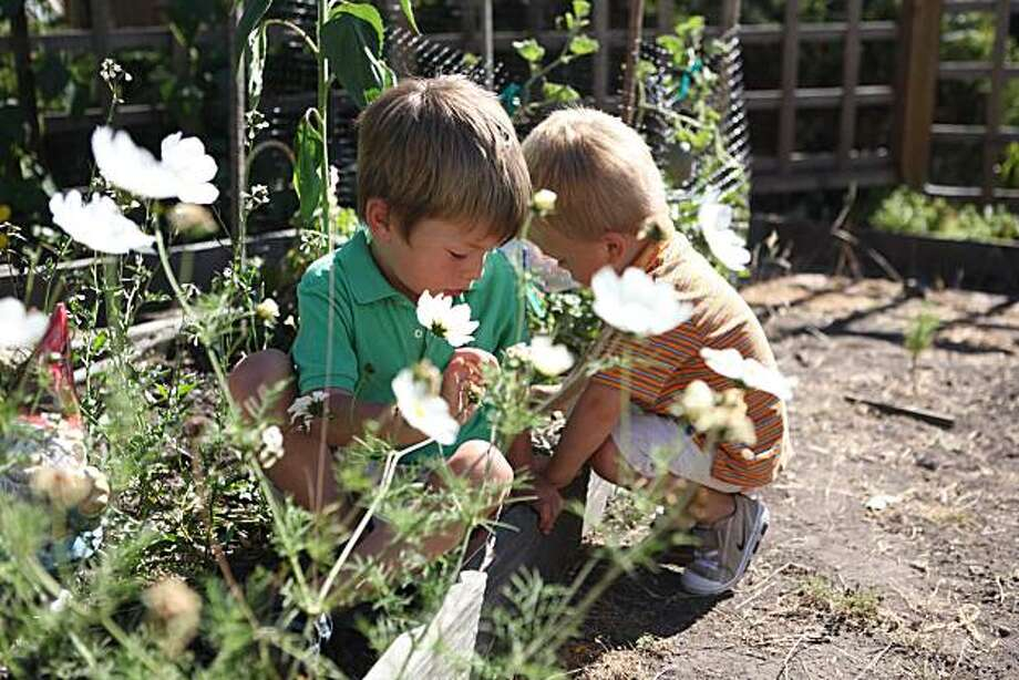 Otto Williams, 4, and Henry Williams, 2, neighbors, play in a flower patch in Gail Machlis' home garden on Friday Sept. 3, 2010 in Berkeley, Calif. Machlis has invited her neighbors to share the garden space which has helped create a tight knit community feeling. Photo: Mike Kepka, The Chronicle