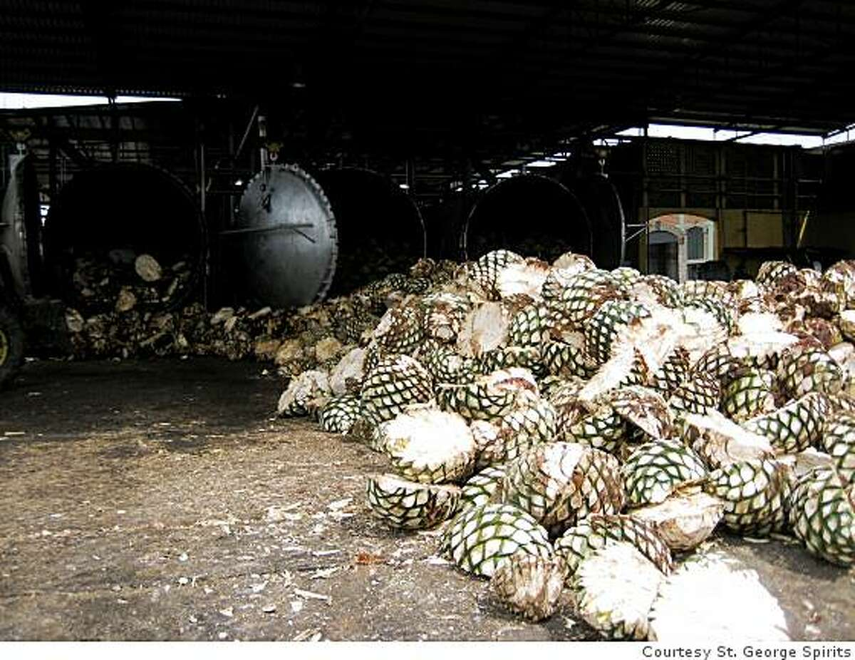 Bins of agave pinas to be used by St. George Spirits. St. George is producing a Tequila-like spirit from blue agave known as Agua Azul.