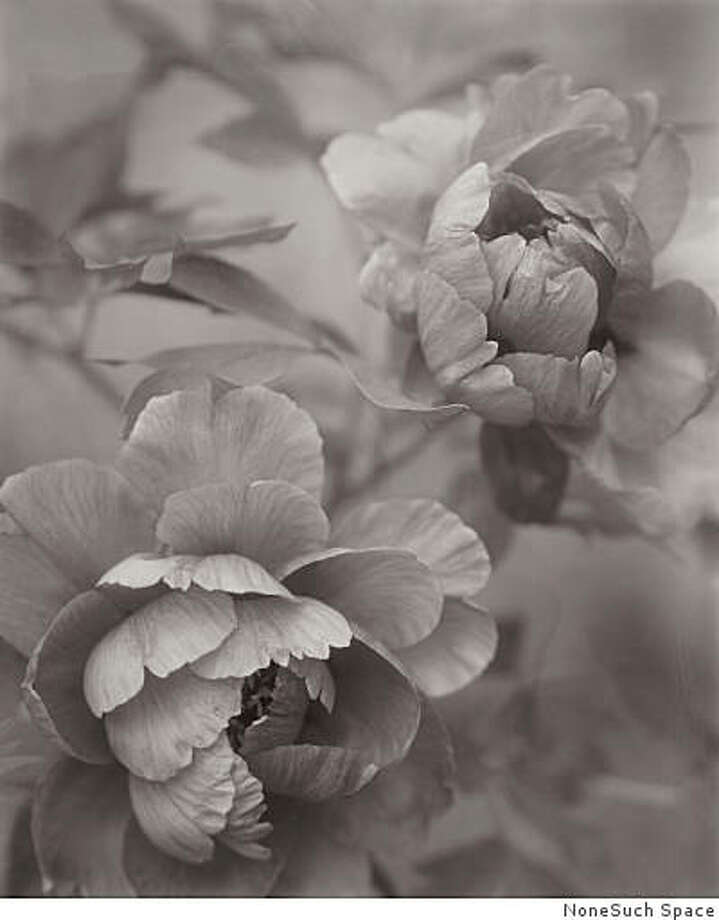 """Venerable Flowers"" by Linda Elvira Piedra. Her black-and-white photographs of natural and mundane objects take on a mystique inviting further exploration. Photo: NoneSuch Space"