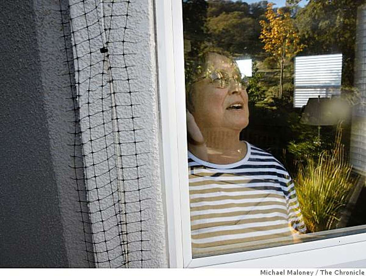 Rossmoor resident Vickie Hipkiss who lives on High Eagle Court looks out her window which is surrounded by netting to keep out woodpeckers. She and other residents have been having the eaves and window sills of their homes destroyed by woodpeckers who are storing their acorns in the holes they make. Rossmoor is considering shooting some of the birds.