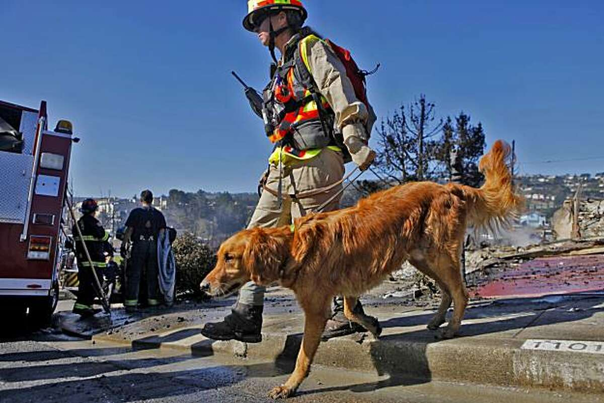A Sheriff walks a cadaver dog down Fairmont as they to look for bodies, Friday Sept. 10, 2010, in San Bruno, Calif.