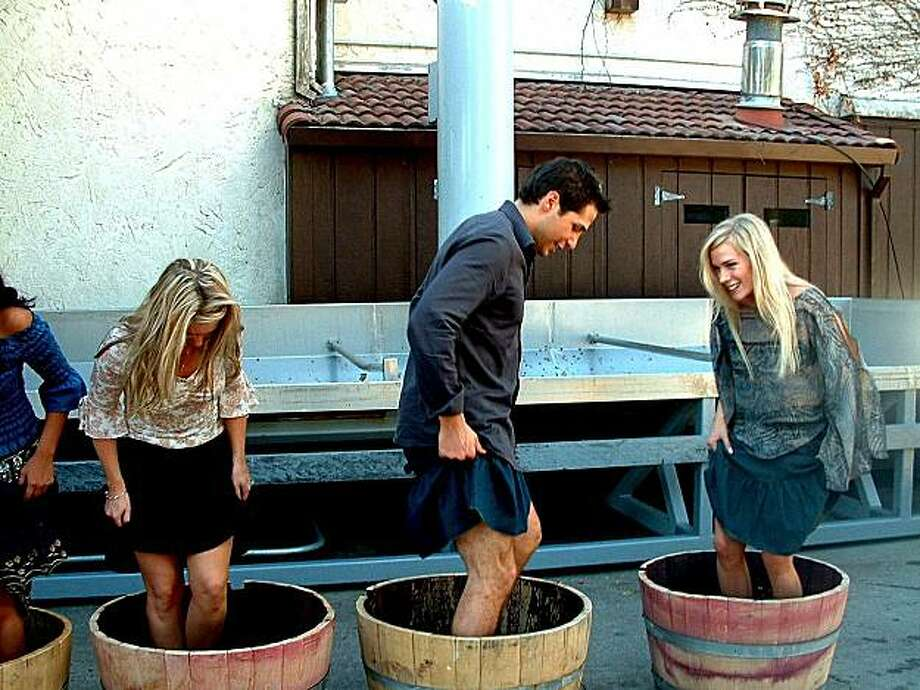 People stomping on grapes in barrels at Grgich Hills Cellar. Photo: Courtesy Grgich Hills Cellar, Sfc