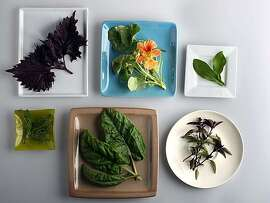 A group of specialty herbs in San Francisco, Calif., on Tuesday, July 27, 2010.  Clockwise from top--Red Shiso, Nasturium, Stevia, Thai basil, Sorrel, and Chamomile.