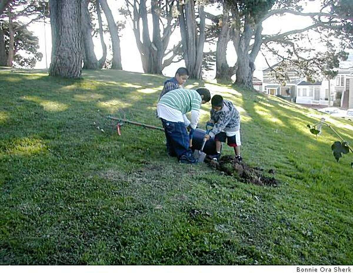 The Bernal Heights Nature Walk frames the Islais watershed from the south slope of Bernal Heights to St. Mary?s Park. Last November at Holly Park, 200 Junipero Serra students helped plant native trees and shrubs: coast live oak, ceanothus ?Ray Hartman?, flannelbush, buckeye, silktassel, toyon, redbud.