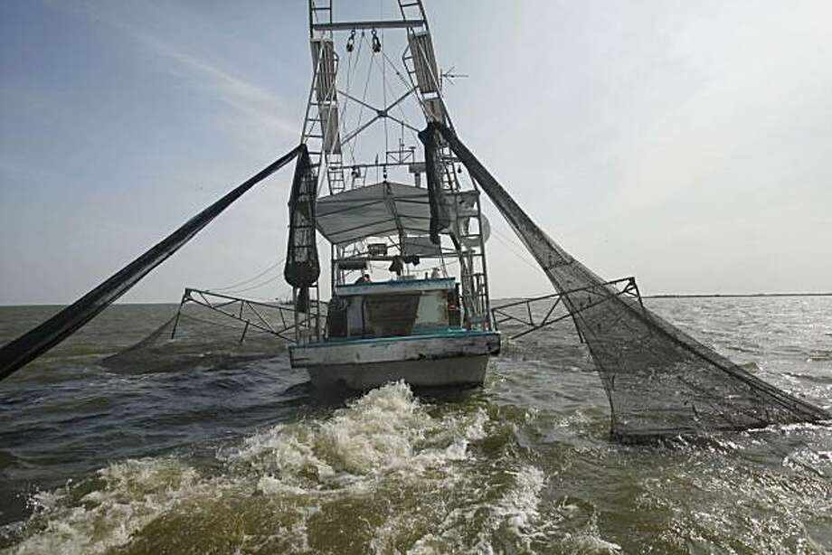 Shrimpers haul in their catch in Bastian Bay, near Empire, La., on the first day of shrimping season since the Deepwater Horizon oil spill, Monday, Aug. 16, 2010. Photo: Gerald Herbert, AP