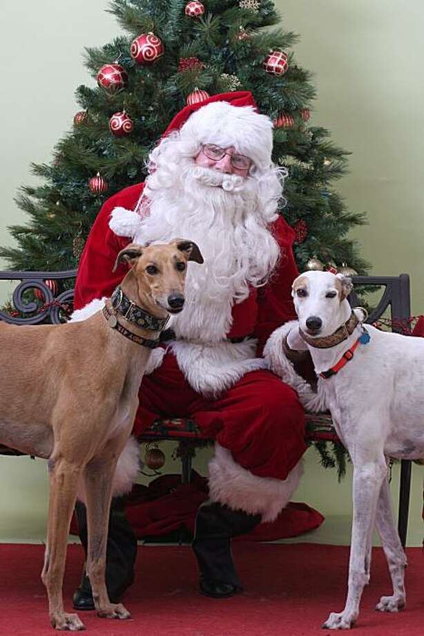 Indy (left) and Molly with Santa. Photo: Marin Humane Society