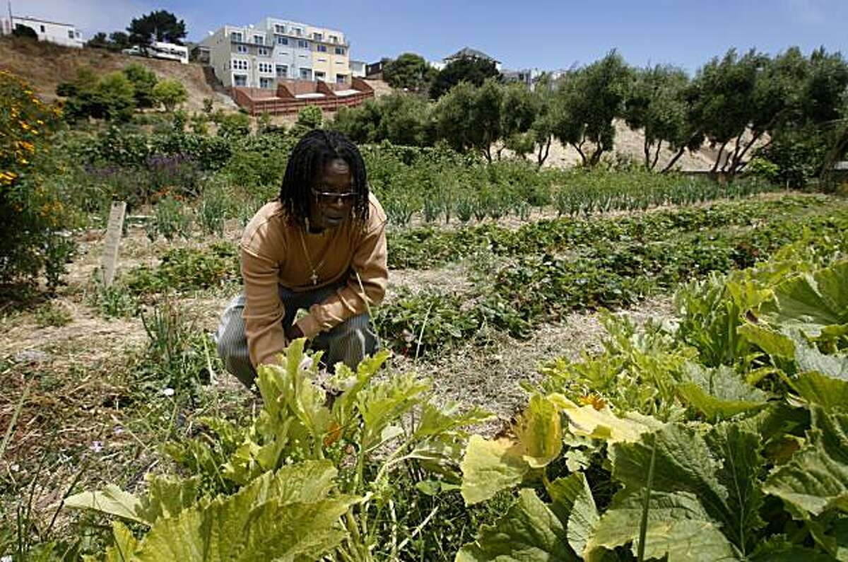 Alemany Farms executive director Alice Carruthers checks the zucchini crop at the urban garden in San Francisco, Calif., on Thursday, July 16, 2009. The sprawling garden takes up over 4 1/2 acres and is partly on land owned by the city Recreation and Park department and the Housing Authority.