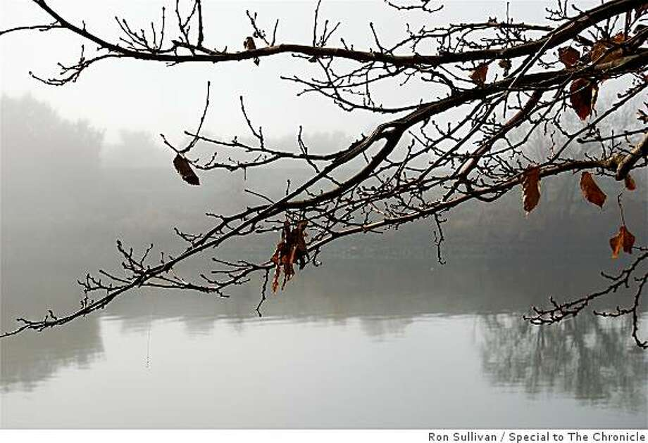 Dormant twigs in January fog on Sacramento River waterfront, Sacramento CA. Photo: Ron Sullivan, Special To The Chronicle
