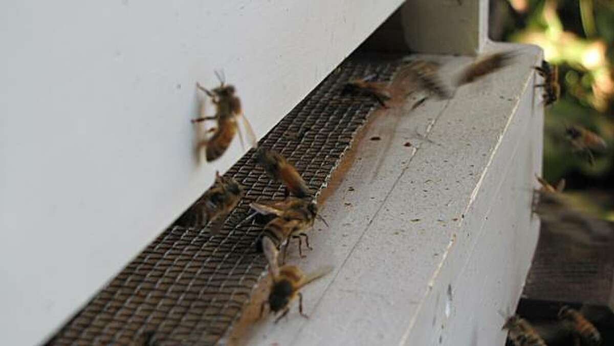 Bees enter and leave the hive in Glenn Forrester's backyard apiary in Piedmont.