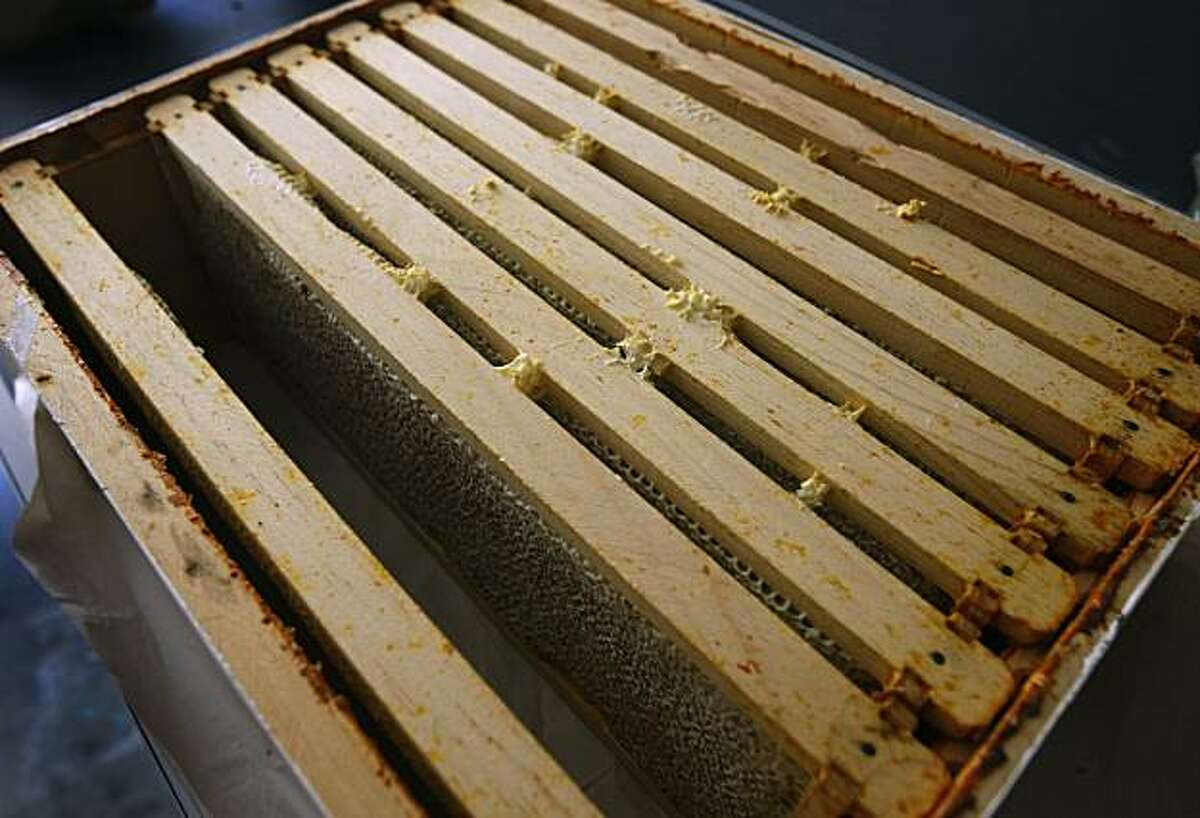 A box containing trays of honeycomb is removed for harvesting from a backyard beehive in Piedmont, Calif., on Saturday, July 3, 2010.